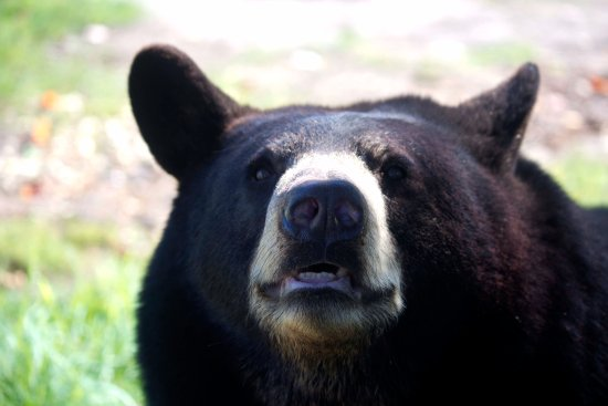 Oswald's Bear Ranch: This little guy wanted to get up close and personal!