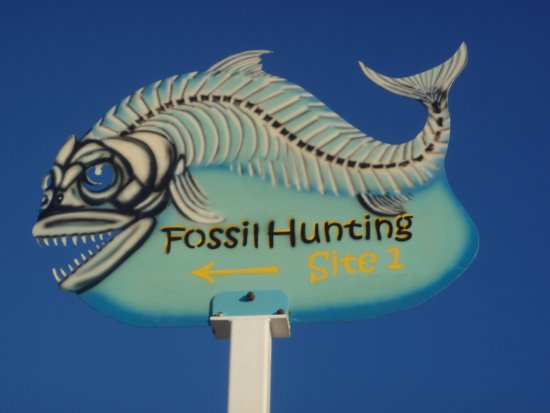 Richmond Fossil Hunting Sites照片