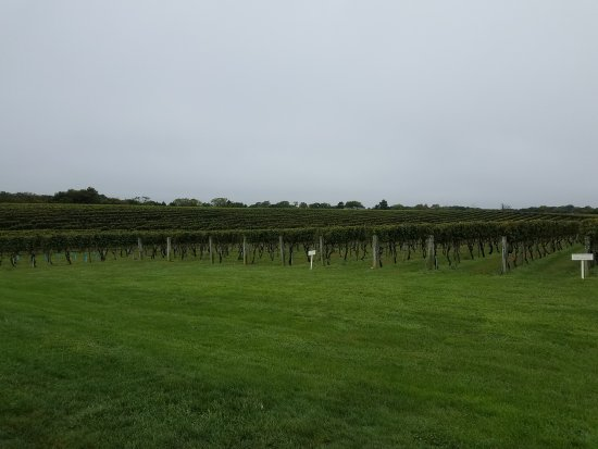 Wölffer Estate Vineyard: 20171014_135551_large.jpg