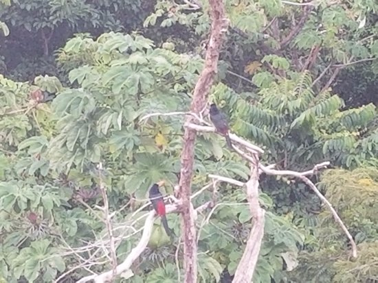 La Mansion Inn: Tucan pair spotting from the pool area