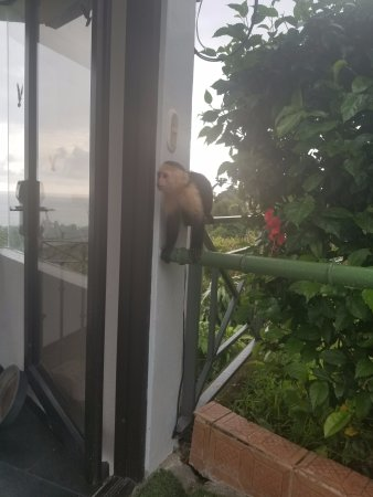 La Mansion Inn: Monkey by the pool area