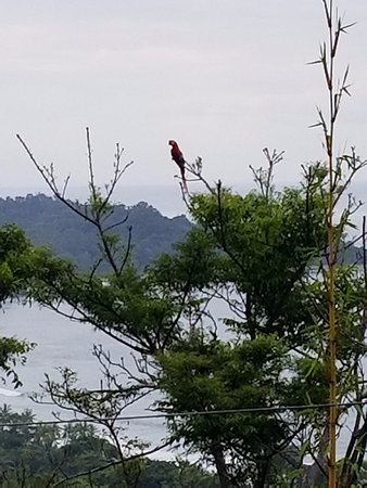 La Mansion Inn: Macaw spotting from our room
