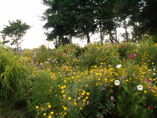 Tirau, Nowa Zelandia: Wildflower areas provide habitat and food for insects - giving natural balance and control to pe