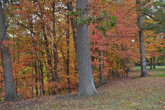 Belleville, MI: Lower Huron Metro Park Fall Beauty
