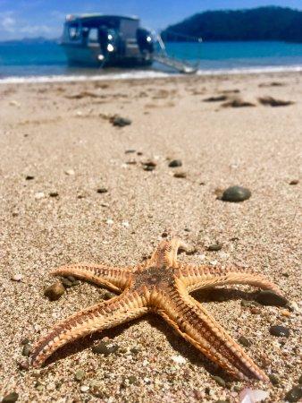 Paihia, New Zealand: Marine life