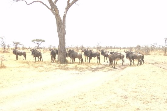 3-tägige Safari-Tour zum Masai Mara...
