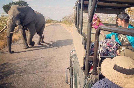 Premium Kruger Park Full-Day Private...