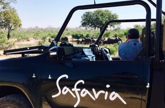Premium Kruger Park Full-Day Safari