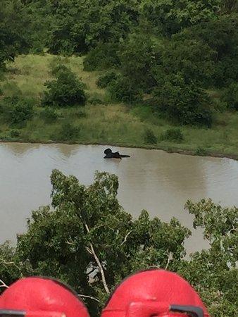 Mole National Park, Gana: photo5.jpg