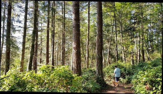 Inn to the Woods: 20170817_100056_large.jpg