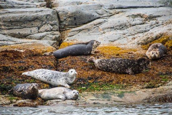 Campbell River, Canada: Seal lions, seals, etc