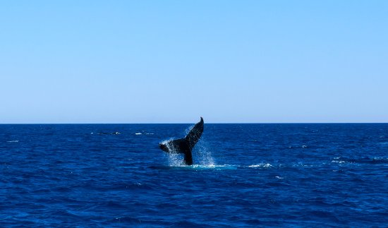 Busselton, Australia: A show of tail as we departed