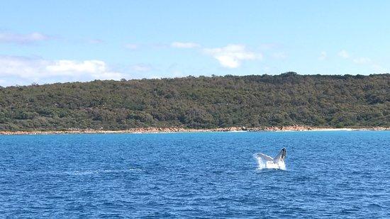 Dunsborough, أستراليا: photo0.jpg