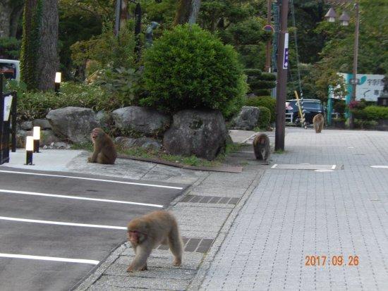 Kurobe, Japan: サルの群れ