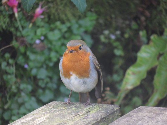 Ilfracombe, UK: This was one of the friendly residents that followed us around the tour of the garden.