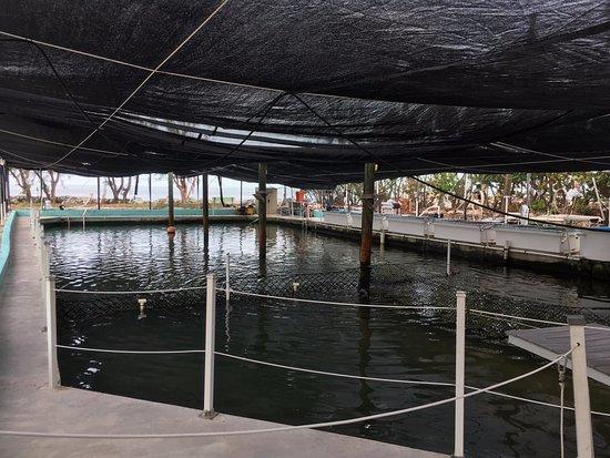 The Turtle Hospital : La gran piscina en contacto con el mar