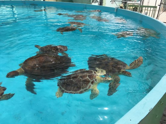The Turtle Hospital : Una de las principales piscinas