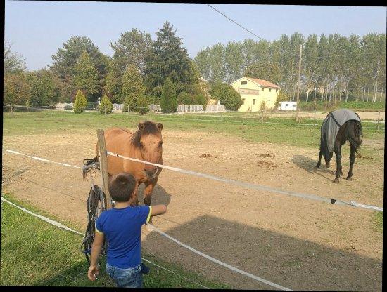 Baricella, Italien: IMG_20171014_142725_large.jpg