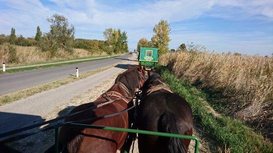 Pferdewagenfahrten Vinzenz Gangl Private Tours: Pferdewagenfahrten Vinzenz Gangl