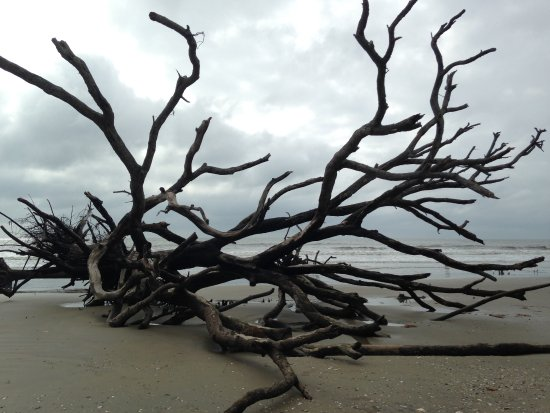 Edisto Island, SC: More trees