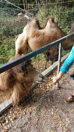 Zoo Schmiding: Feeding the animals