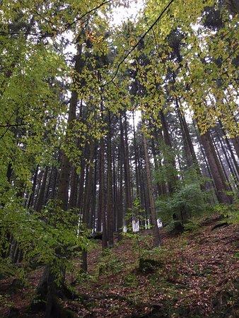 โบฮีเมีย, สาธารณรัฐเช็ก: The hiking trail to Pravcicka Gate