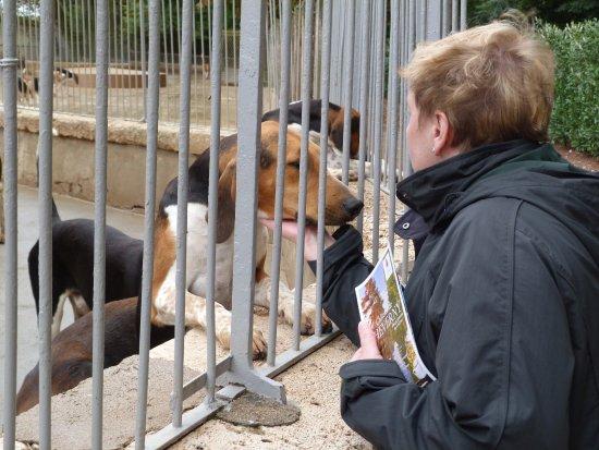 Cheverny, Frankrike: hunting dogs