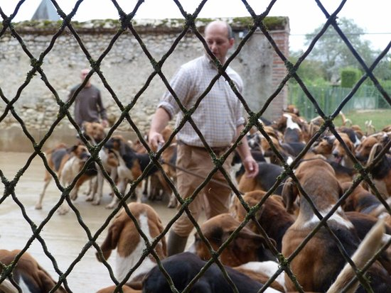 Cheverny, Frankrike: they lever hit the dogs
