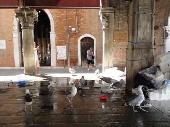 Mercado de Rialto: Las gaviotas de parabienes