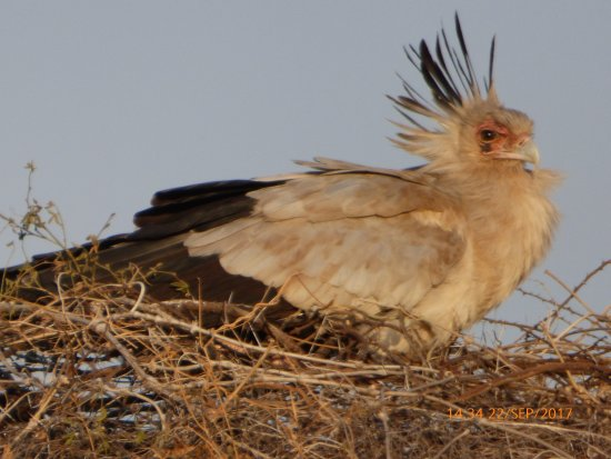 Rhino River Camp: Secretary bird