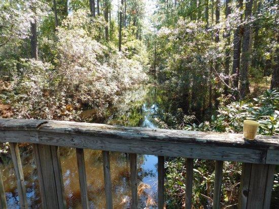 Hardeeville, Νότια Καρολίνα: Lots of nature!
