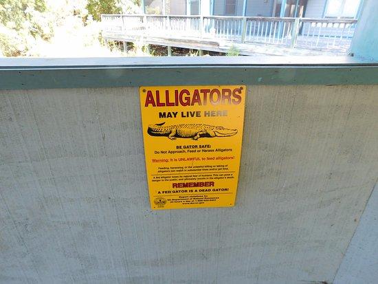 Hardeeville, SC: Another alligator warning