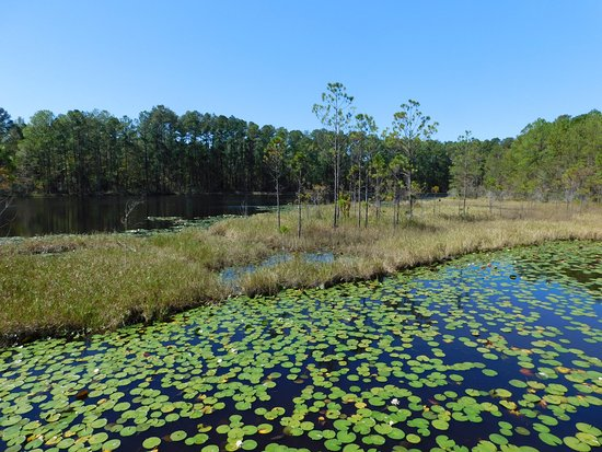 Hardeeville, SC: The pond