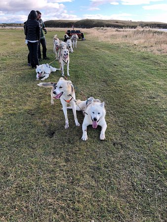 Selfoss, Islandia: Dogsledding Iceland - October 2017