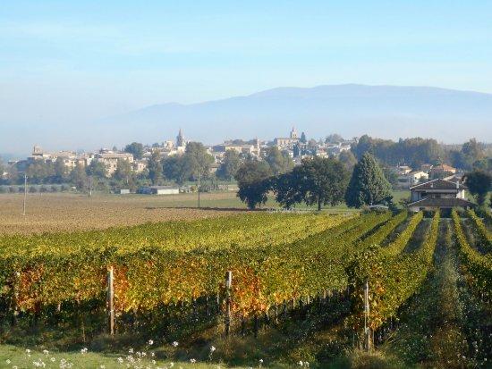 Montefalco, Włochy: Vineyards, Bevagna and fog.