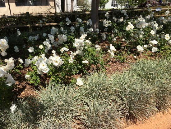 Constantia, South Africa: garden planting