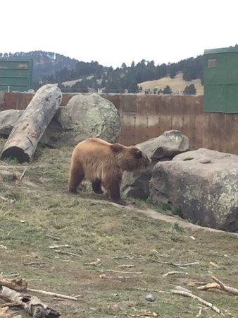 Montana Grizzly Encounter : Grizzlies