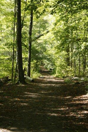Manchester, VT: Forest walks