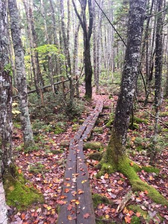 Cutler, ME: Coastal trail