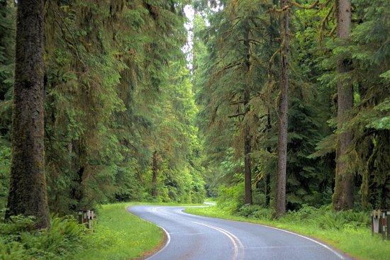 Hoh Rain Forest: Amazing
