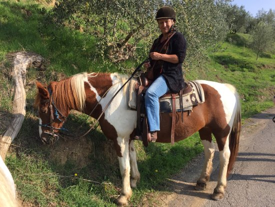 Lucca Horseriding : October 2017