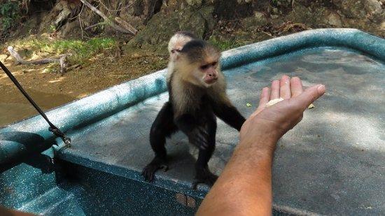 Monkey Island : alimentando a los monos