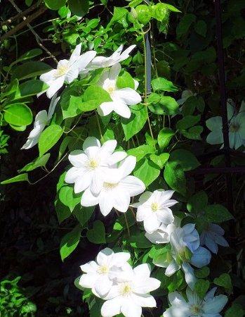 Belmont, Carolina del Norte: gardens