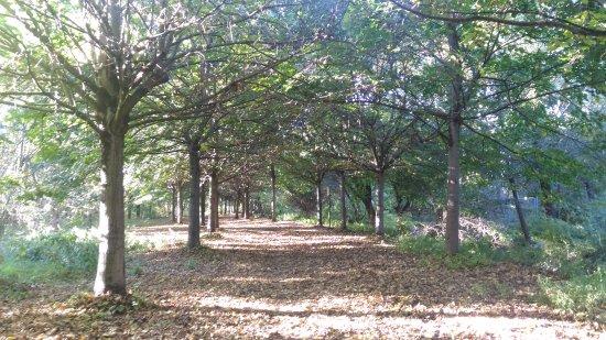 Bovolone, อิตาลี: Parco del Menago, passeggiata lungo il canale e nel parco