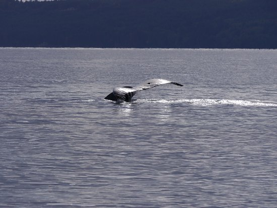 Wild Whales Vancouver: Our lucky day!
