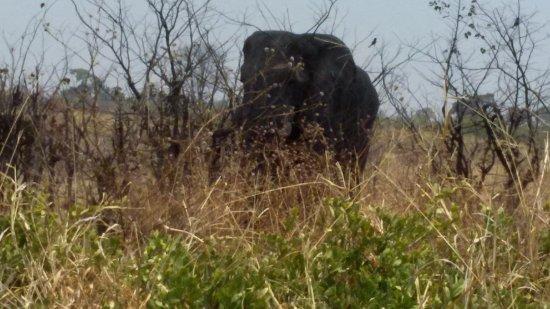 Moremi Wildlife Reserve : elefante en la reserva