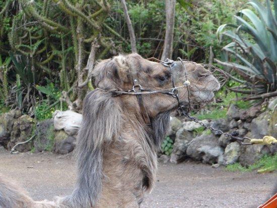 El Tanque, İspanya: Camello Center