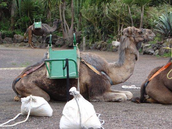 El Tanque, Espanha: Camello Center