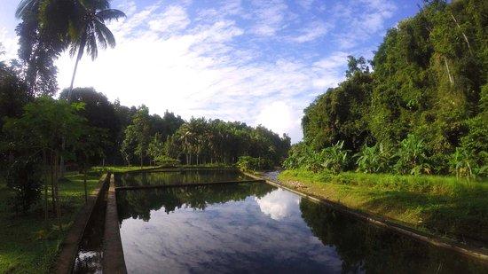 bassin/piscine naturelle