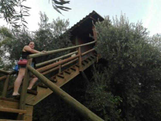 Villarrubia de los Ojos, España: Casa-nido situada sobre un olivo.
